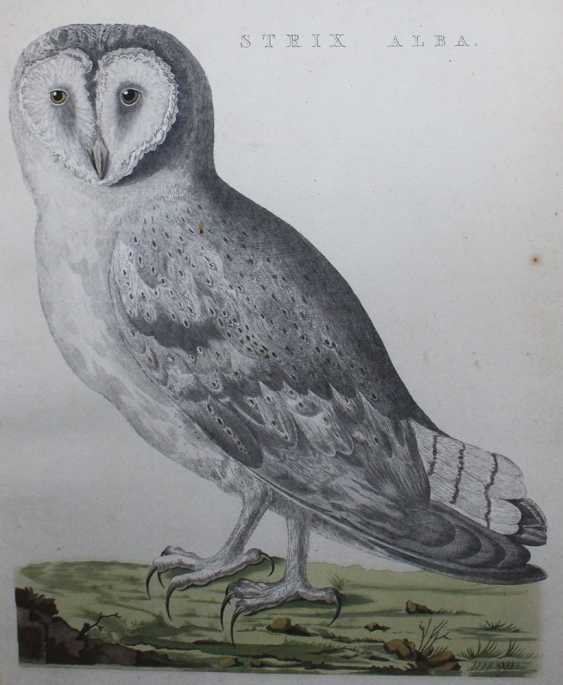 Ornithological Copper Print - photo 3