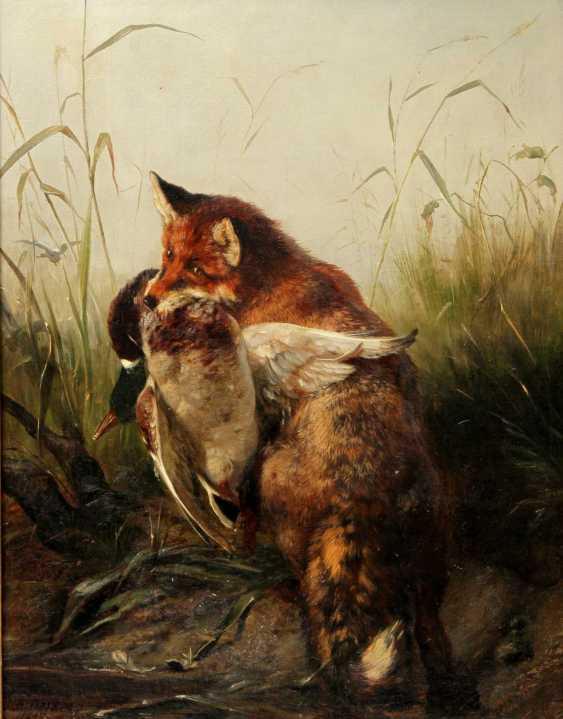"""DEIKER, CARL FRIEDRICH (Wetzlar 1836-1892 Düsseldorf), """"Fox with trophy duck in the reeds"""" - photo 1"""