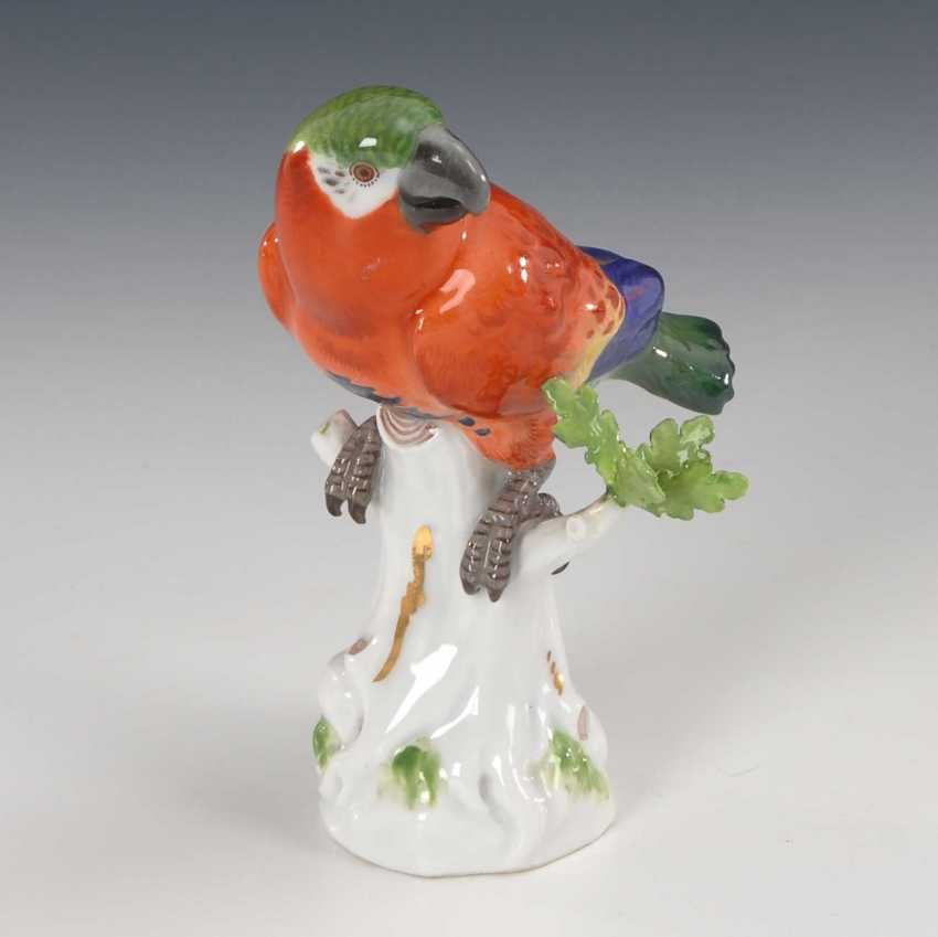 Parrot, Meissen. - photo 2
