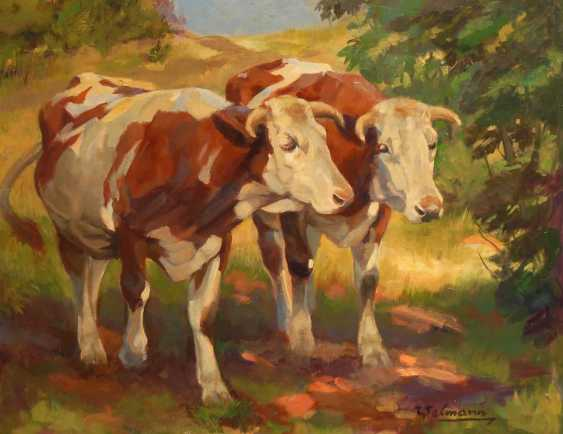 Welmann: Two colorful spotted cows. - photo 1