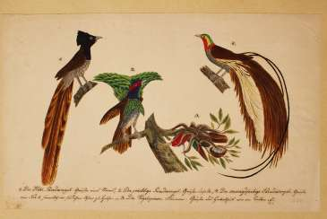 German artist, nature studies, black ink watercolour on paper, both sides with birds etc. early 19. century