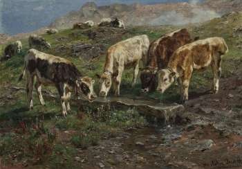 Four young cattle at the watering hole