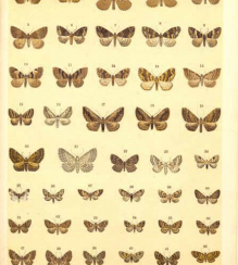 Atlas of the butterflies of Europe