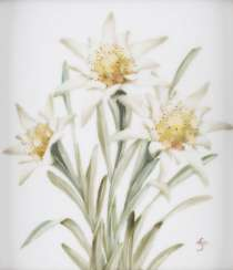 Porcelain picture plate 'EDELWEISS' German, Rosenthal, 20. Century