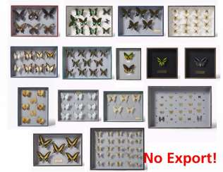 Fifteen entomological boxes with butterflies