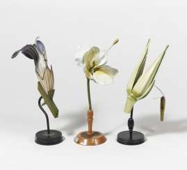 Four plant anatomical models