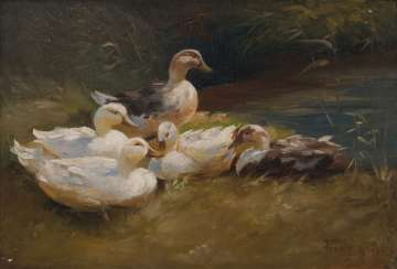 Five ducks on the bank