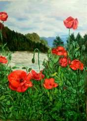 Poppies in the valley