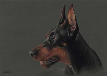 Pastel portrait of dobermann