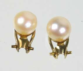 Akoya Pearl Earrings - Yellow Gold 333