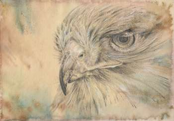 Falcon. Drawing, handwork, 2019 the Author - Natalia Pisareva
