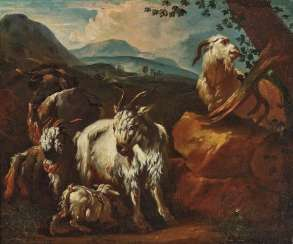 Goats in the southern landscape