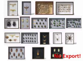 17 entomological boxes with beetles, other insects and spiders