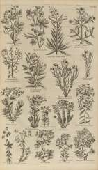 HILL, John (1716?-1775) - The British Herbal: An History of Plants and Trees
