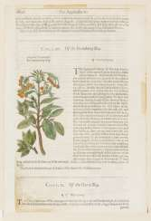 "2 sheets from ""The Herball or General History of Plants"""
