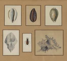 Unknown-clams and stag beetles, 19th century