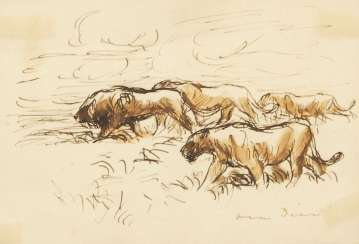 Dill, Otto: lions in the Savannah.