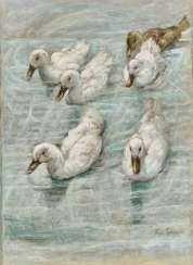 Six swimming ducks, the end