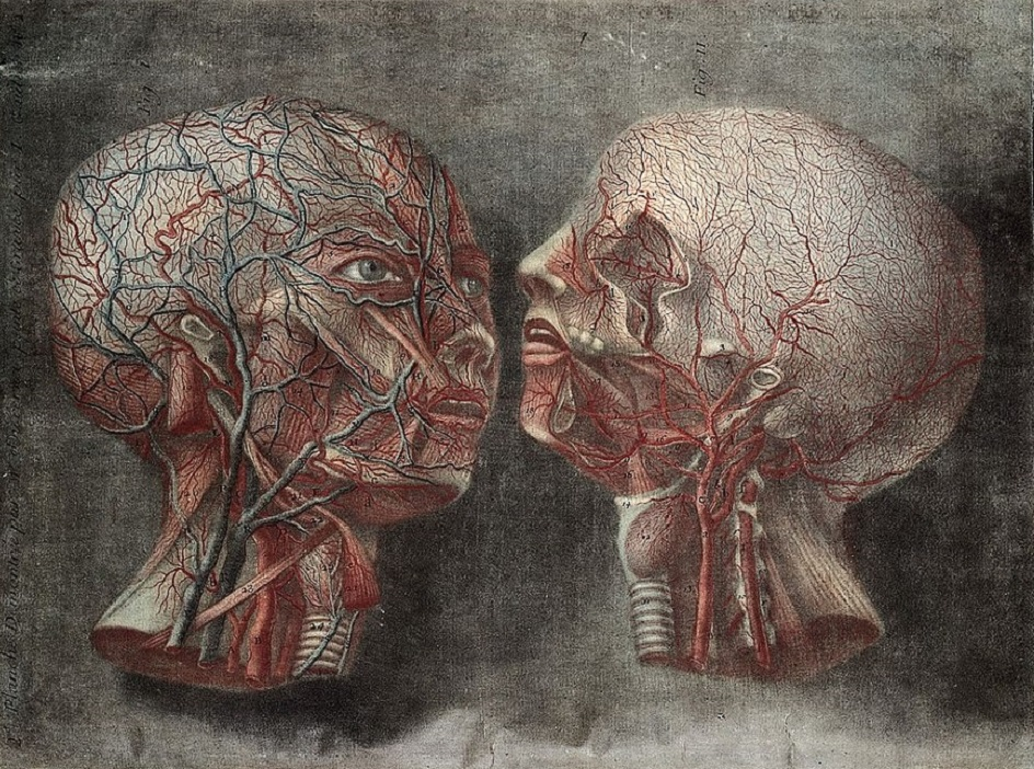 Меццо-тинто. Жак Фабьен Готье д'Аготи. Гравюра «Анатомия головы», 1748