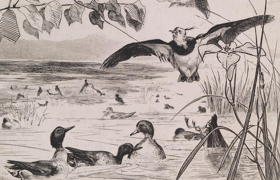 Гравюра. Резерваж. Феликс Бракемон. «Пейзаж с утками»
